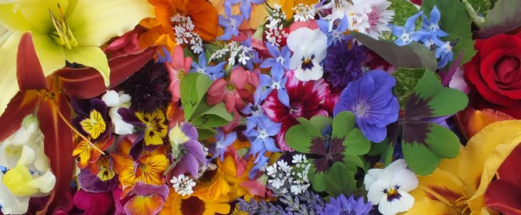 Image: Maddocks Edible Flowers