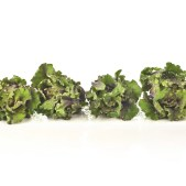 row of kalettes