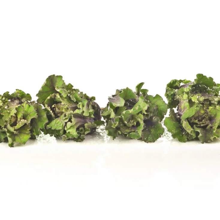 row of kalettes/flowersprouts