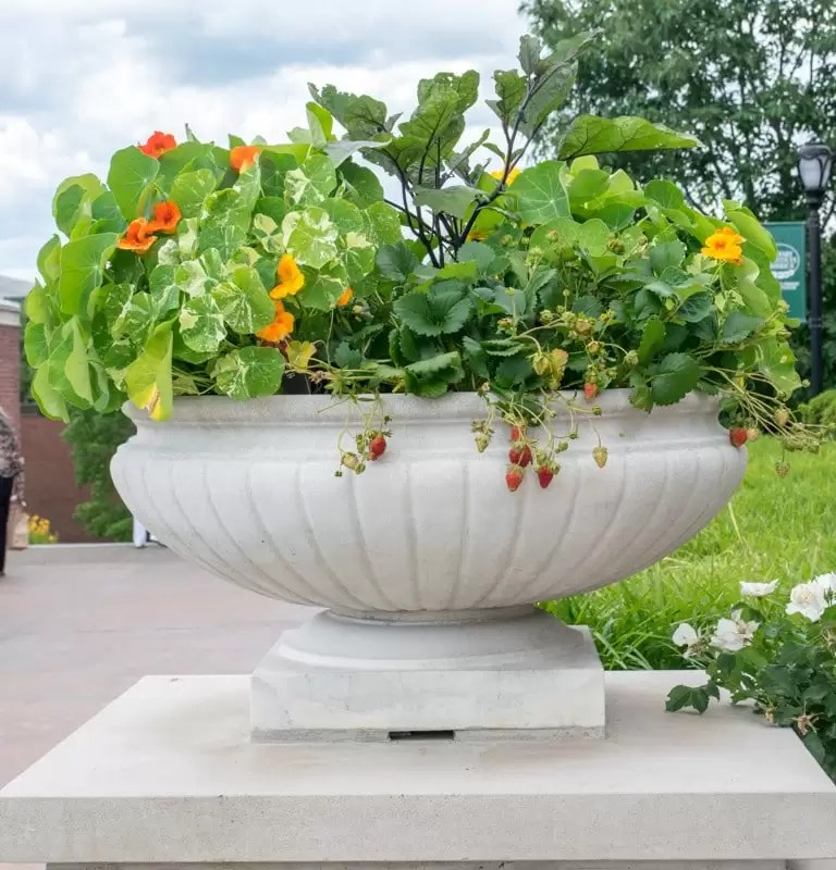Recipes' to help you create stunning container gardens, including this lovely pot which incorporates fruit, vegetables, herbs and edible flowers.
