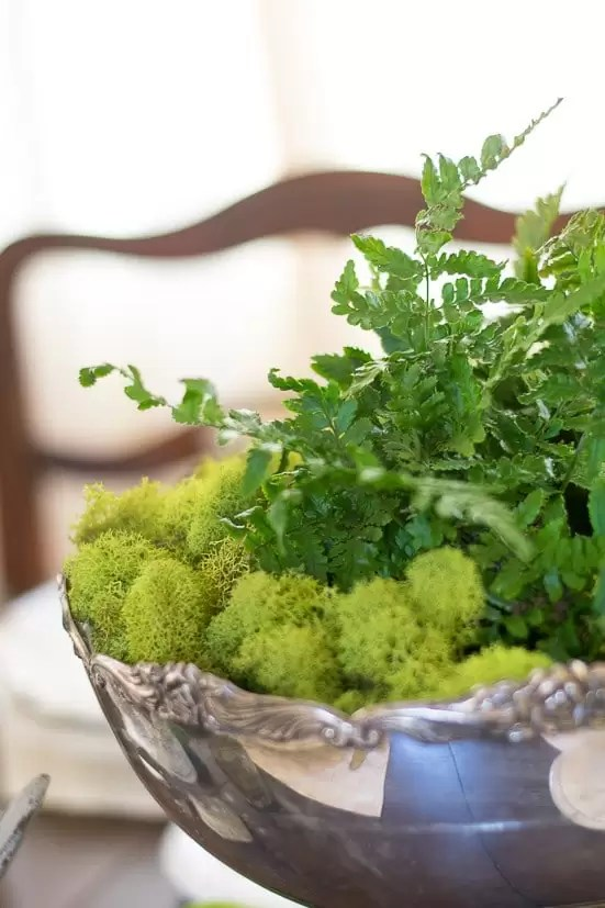 I'm loving all things greenery and mossy in my home decor. Great ideas for using these colors and textures for my spring table decor.