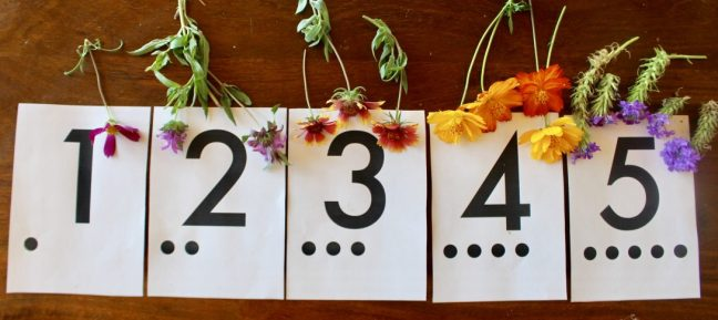 preschool nature counting