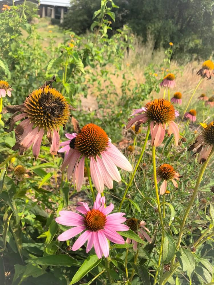 nourished children wildflowers