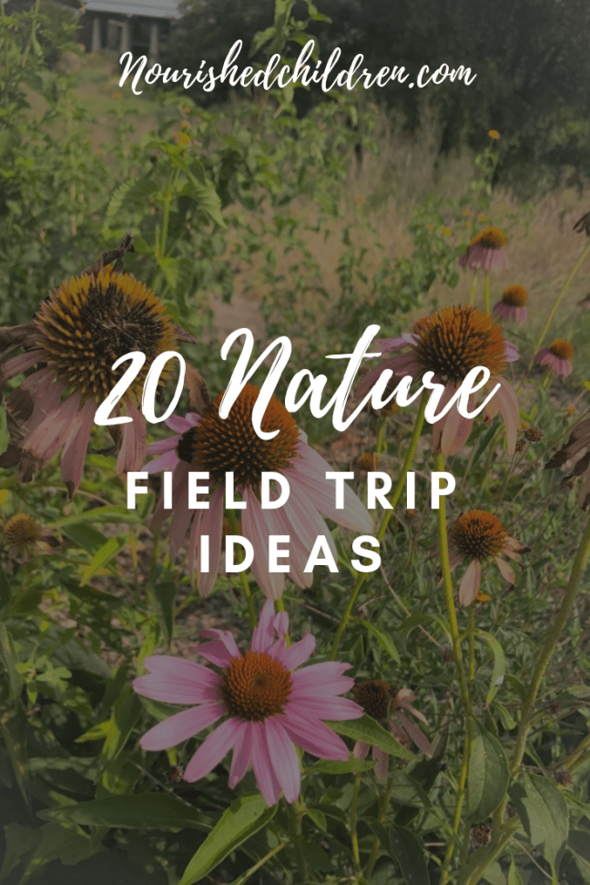 20 Nature Field Trip Ideas