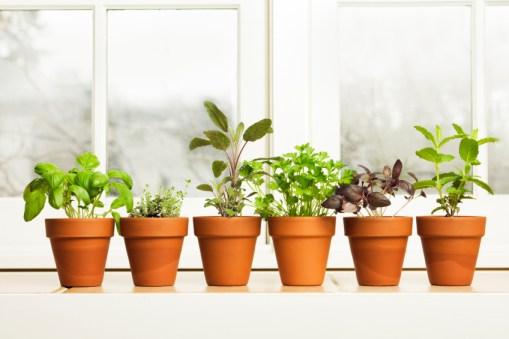 Herbs on Saturday