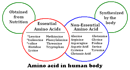 functions-of-amino-acids.PNG