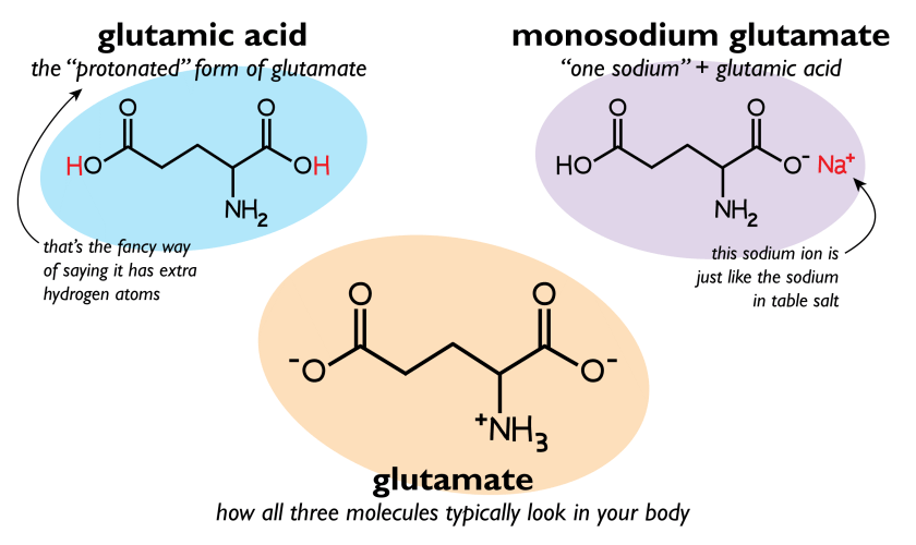 Glutamic Acid, Glutamate, Monosodium Glutamate