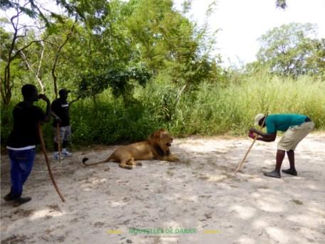 marche-lion-fathala-png