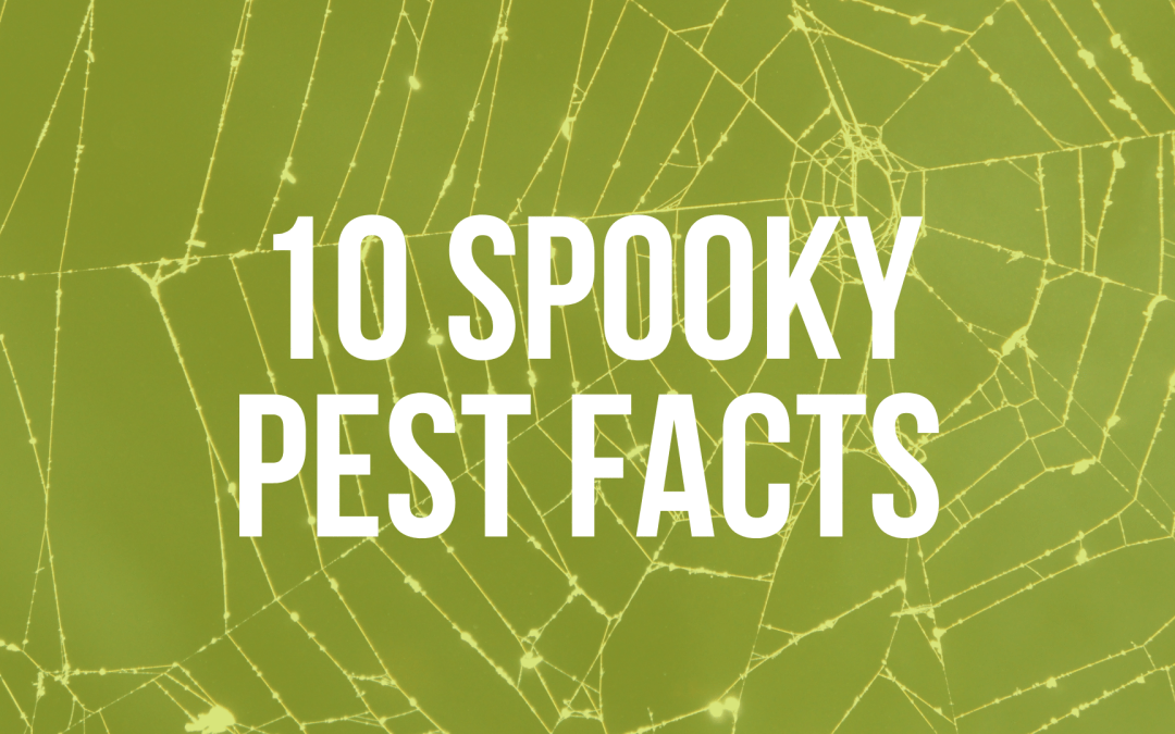 10 Spooky Pest Facts
