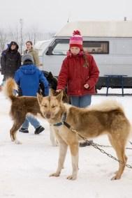 Schlittenhunderennen Februar 2006 (7 von 26)