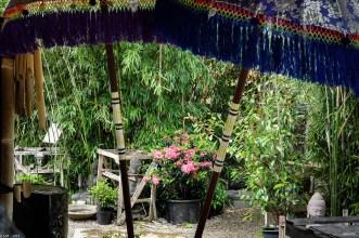 Bambus-Impressionen_170606_4_13
