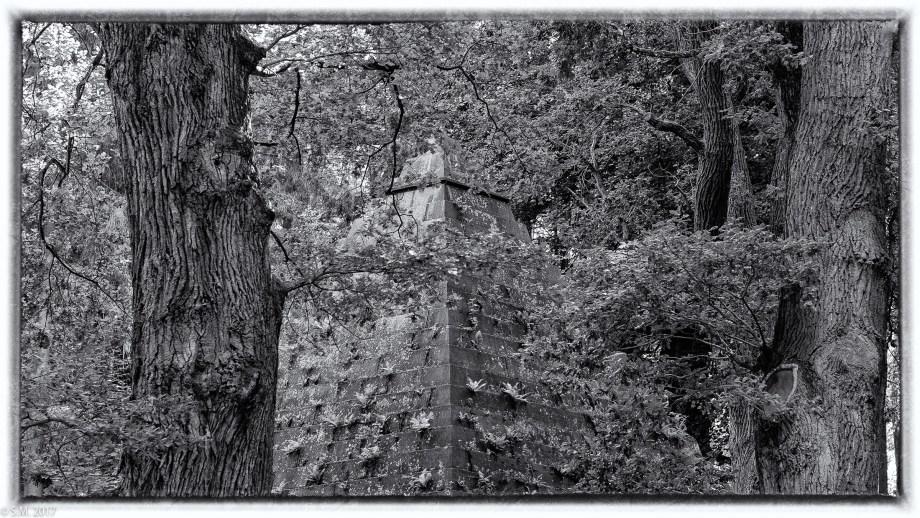 Der Alte im Wald