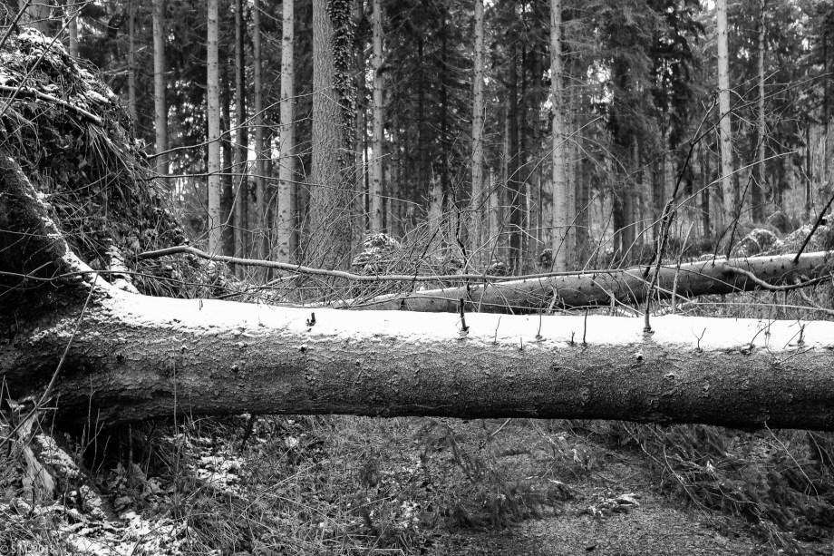Friederike im Hildesheimer Wald