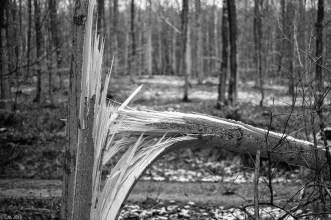 Friederike im Beusterwald_180121_17