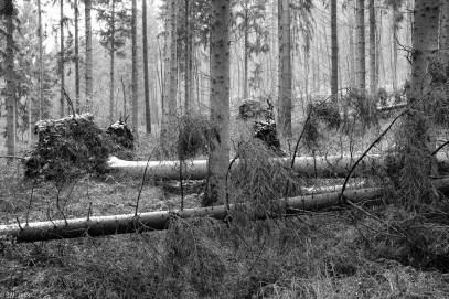 Friederike im Beusterwald_180121_5