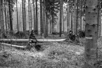 Friederike im Beusterwald_180121_8