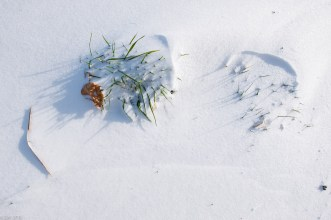 Beuster_Winter (8 von 26)