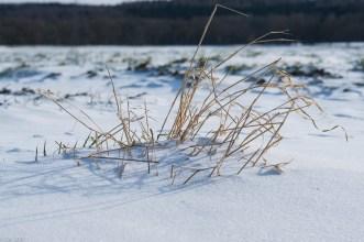Beuster_Winter (9 von 26)