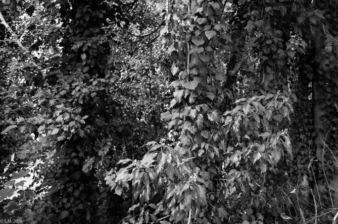 Wrisbergholzen (11 von 58)