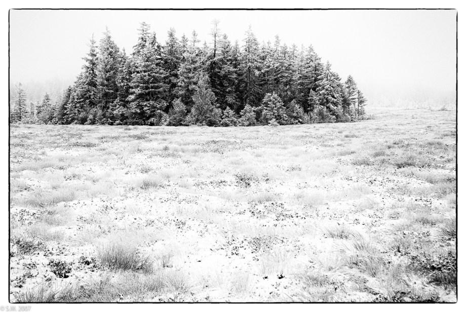 Schnee im Hochmoor