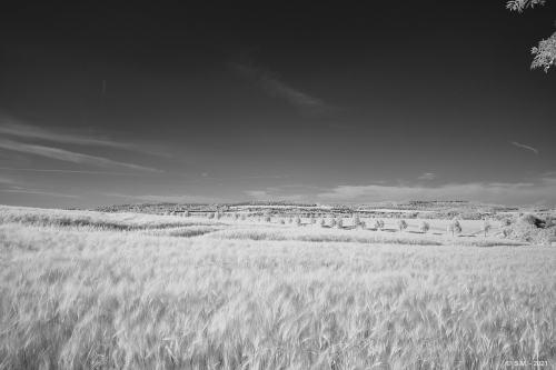 Schwarze Heide - IR _1