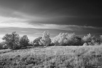 Schwarze Heide - IR _16