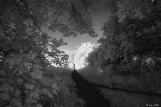 Schwarze Heide - IR _26
