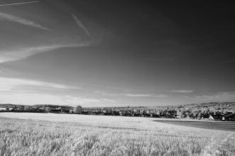 Schwarze Heide - IR _32