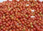 Almería lideró las exportaciones españolas en legumbres y hortalizas en 2016