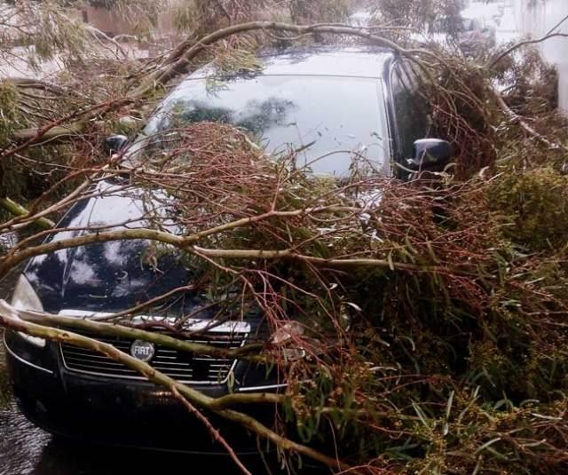 Uno de los destrozos provocados por el temporal Ana.