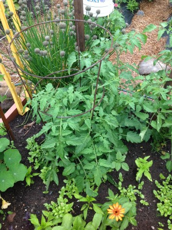 Planted with Basil
