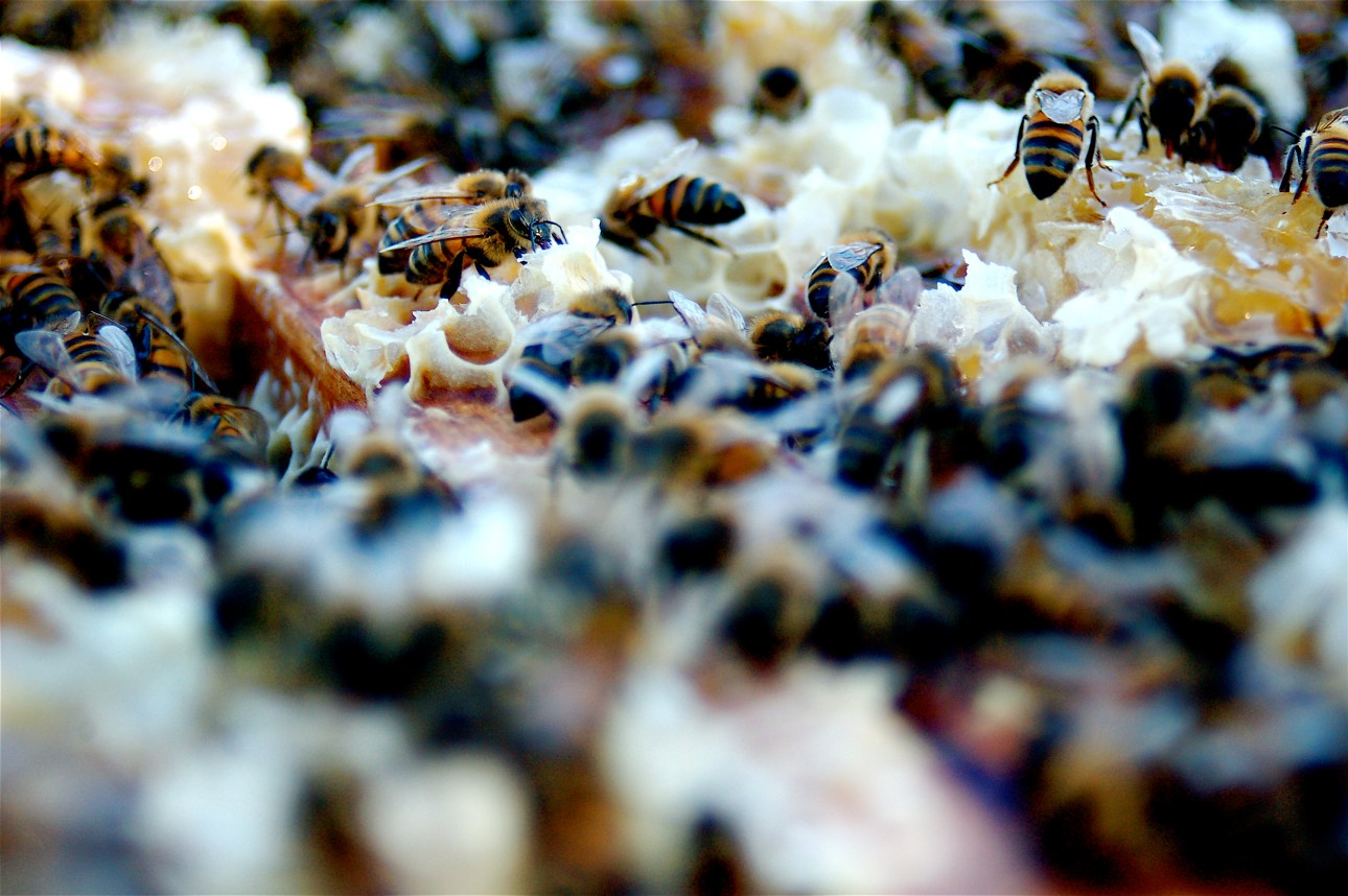 """""""Bees!"""" by Todd Huffman"""