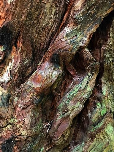 Tree Bark, Big Basin, CA - Photo by Erik S. Peterson
