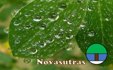 leaves after rain with Novasutras logo