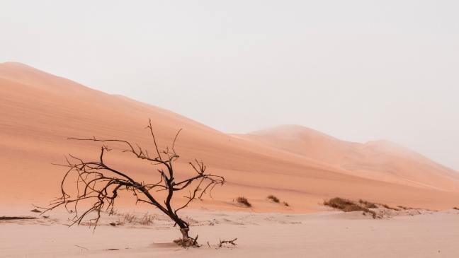 desert with bare shrub