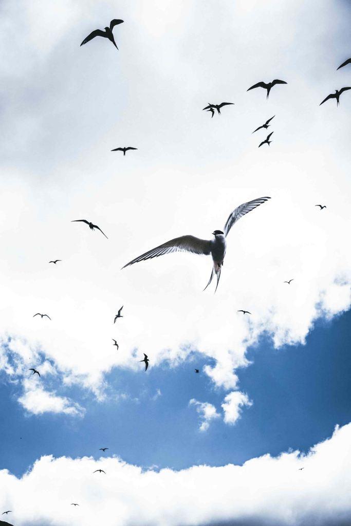 Flying birds. Photo by Ferdinad Stohr via Unsplash.