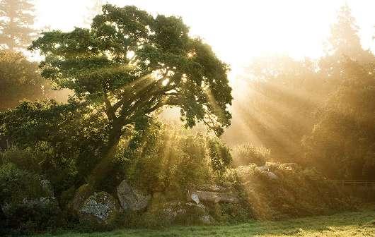 drvo hrast