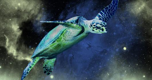 kornjaca leti