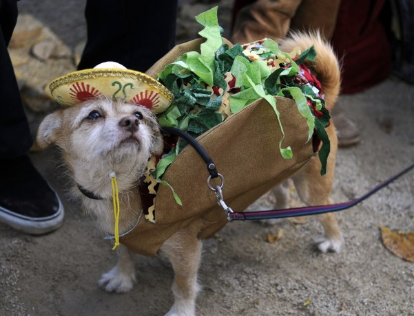 Macaroon, dressed up as Taco Dog,  Halloween came a little early this past Sunday as more than 200 dogs and their owners participated in the 19th Annual Tompkins Square Halloween Dog Parade.