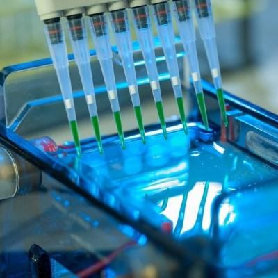 ROKO Agar®se AP STD for standard nucleic acids electrophoresis