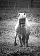 Soames the Pony