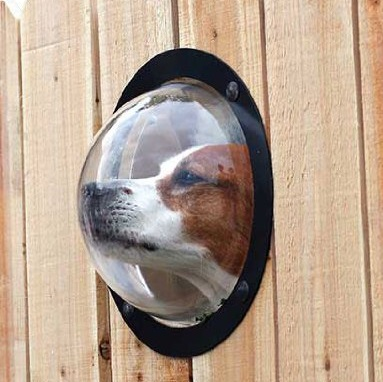 Dog Fence-Window