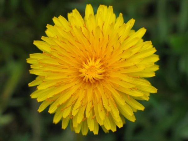 biljka1