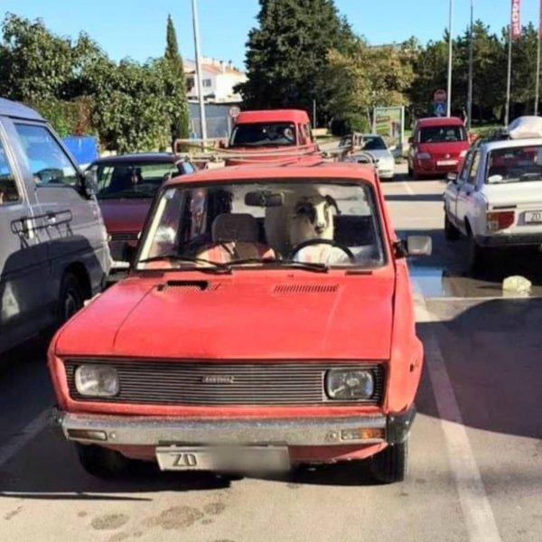 zadar-auto-parking-ovca-foto-lajkhr