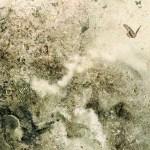 El arte de Ryohei Hase | Noviembre Nocturno 48