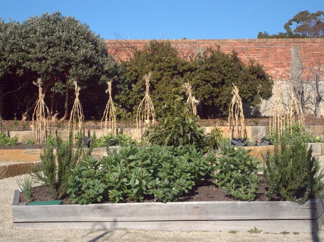 Food garden at the Royal Tasmanian Botanical Gardens