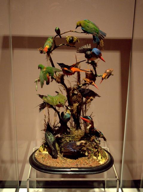 Singapore birds, by J Garner, London (naturalist), presented 1880