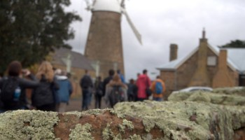 Instagrammers at Callington Mill, Oatlands - said to be the only fully restored and working Lincolnshire wind driven flour mill in the Southern Hemisphere