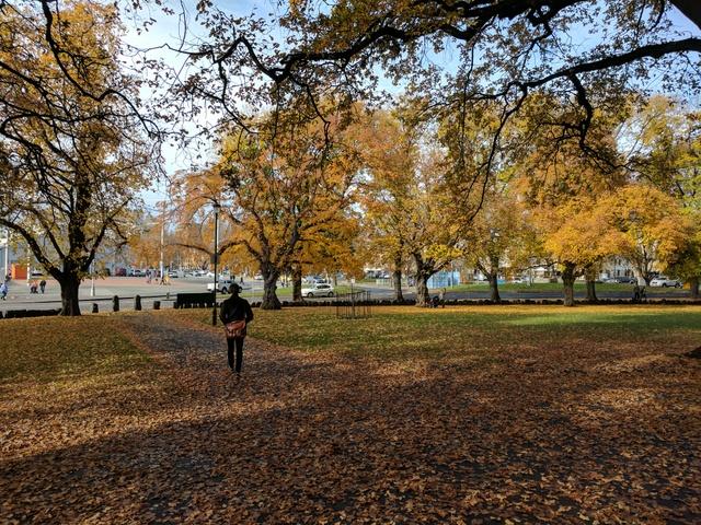 Autumn in Hobart's Parliament Gardens