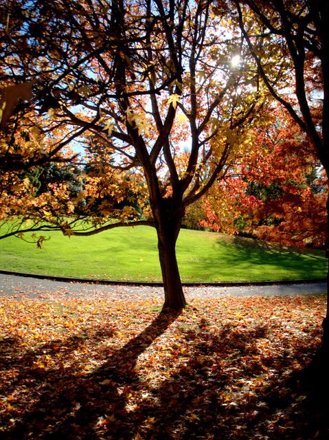 Autumn in the Royal Tasmania Botanical Gardens